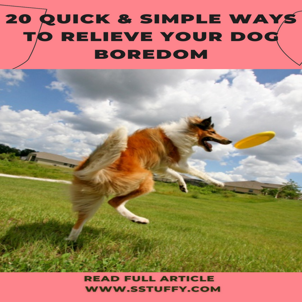 26 Quick & Simple Ways To Relieve Your Dog Boredom