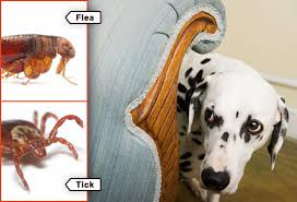 How Do You Know If Your Dog Has Fleas or Ticks?