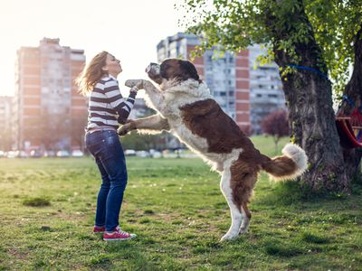 How to Get Your Dog to Stop Jumping on You