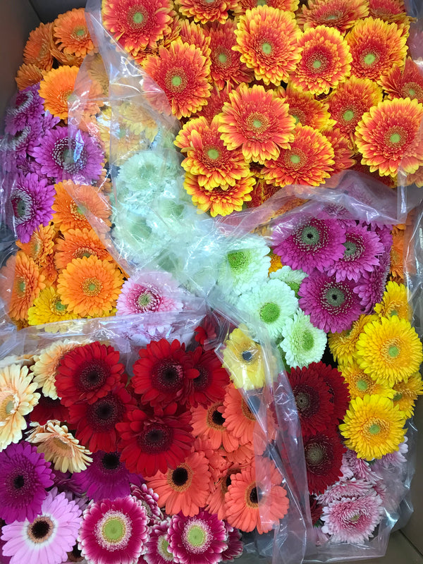 Mini assorted gerbera 10 stem bouquet