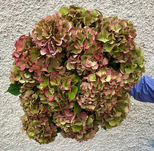 Five stem hydrangea bouquet