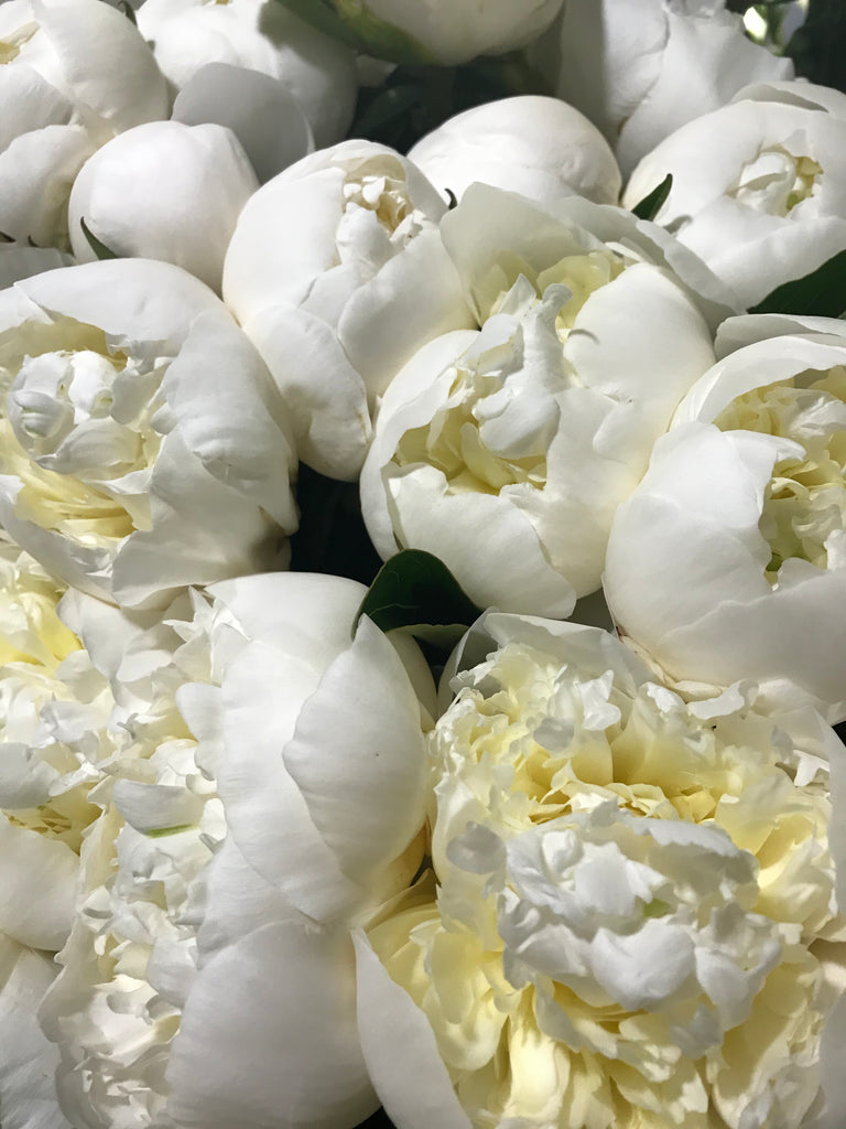 Duchesse White 6 stem bouquet - Winnipeg Flower Delivery by Broadway Florists