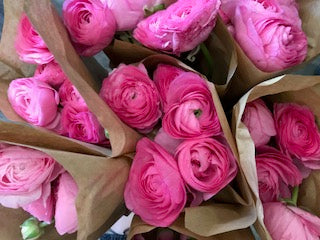 Pink Ranunculus Bouquet - Winnipeg Flower Delivery by Broadway Florists