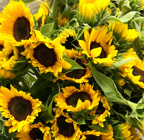 12 stem Sunflower Bouquet