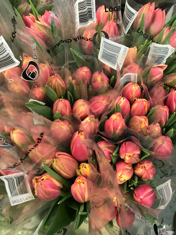 Spring  10 Tulip Bouquet - Winnipeg Flower Delivery by Broadway Florists