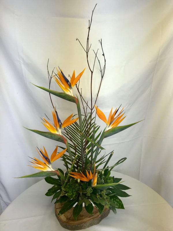 Birds of Paradise - Winnipeg Flower Delivery by Broadway Florists