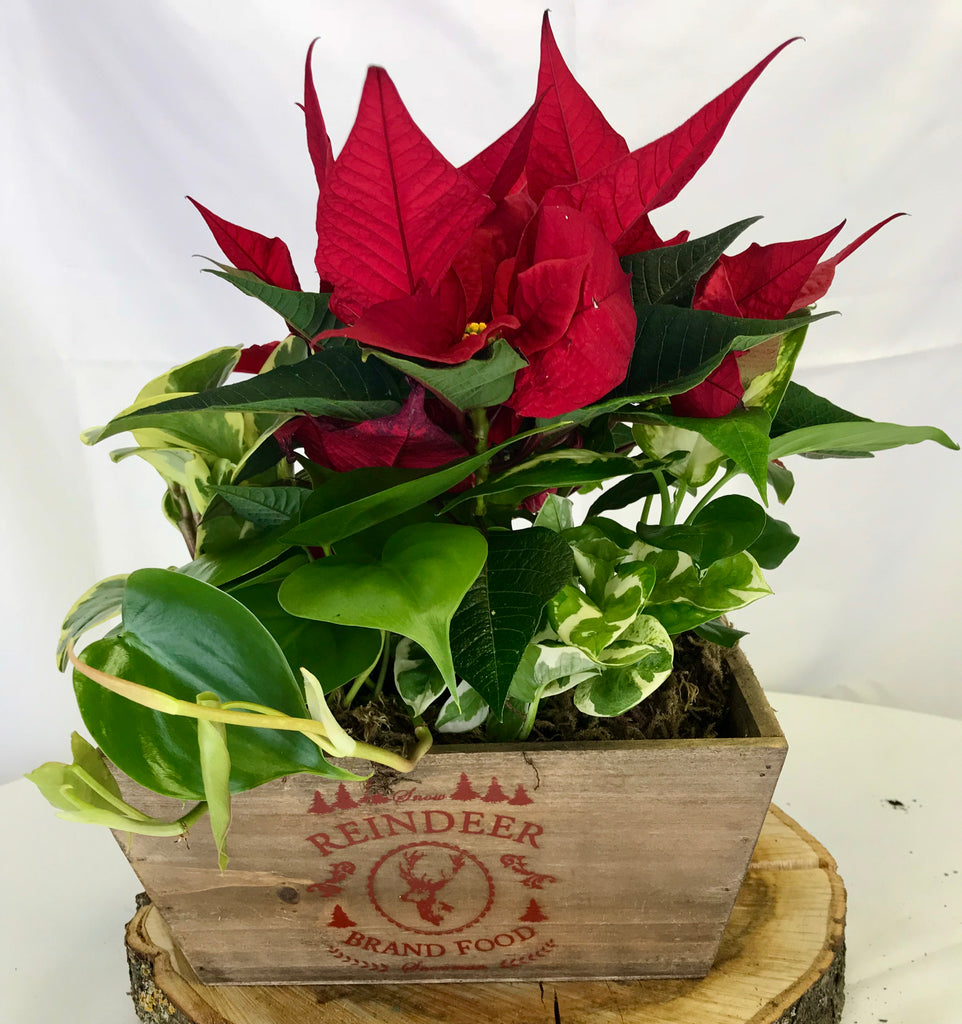 Reindeer wooden box planter. - Winnipeg Flower Delivery by Broadway Florists