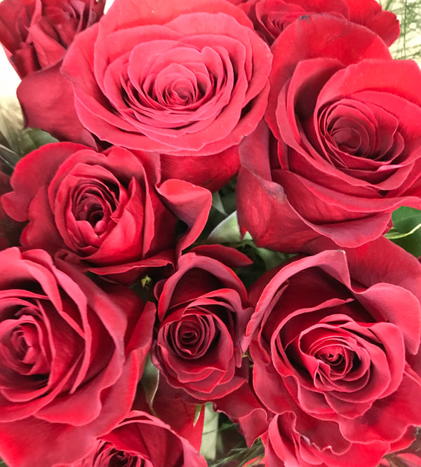 Twelve Long stem Red Roses Special - Winnipeg Flower Delivery by Broadway Florists
