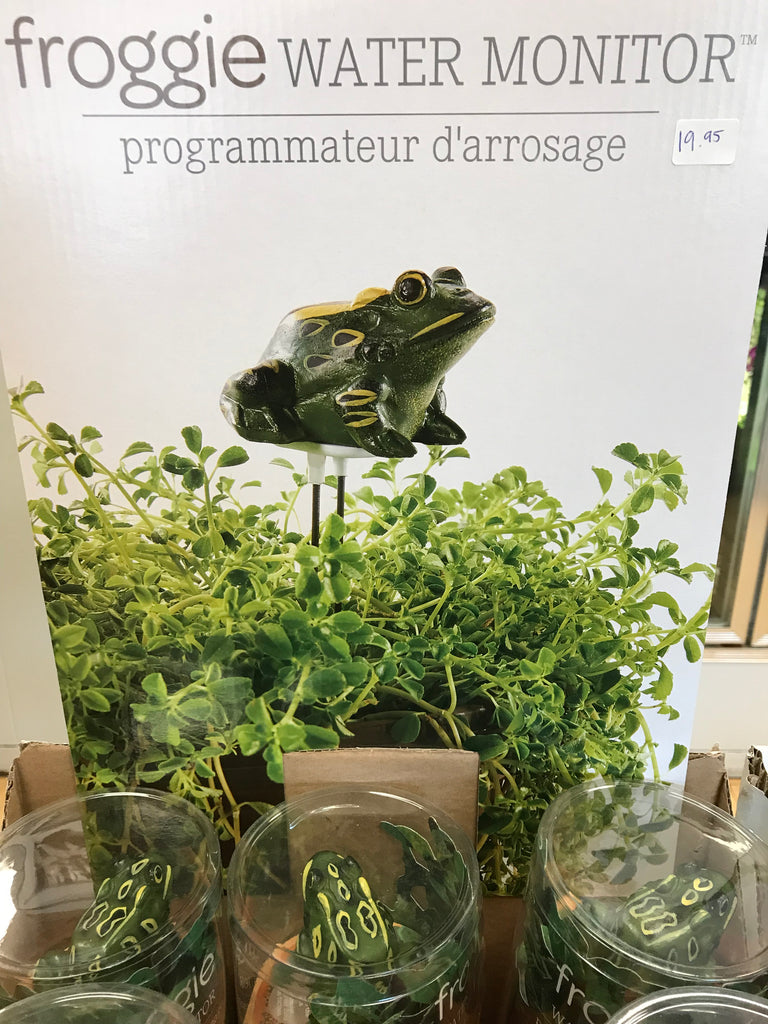 Froggie Water Monitor - Winnipeg Flower Delivery by Broadway Florists