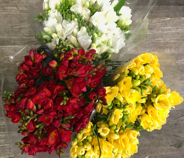 10 stem freesia bouquet