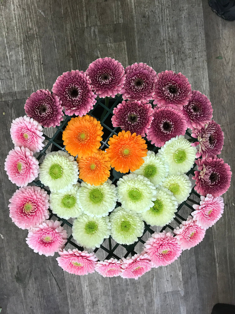 20 stem Gerbera Pomponi - Winnipeg Flower Delivery by Broadway Florists