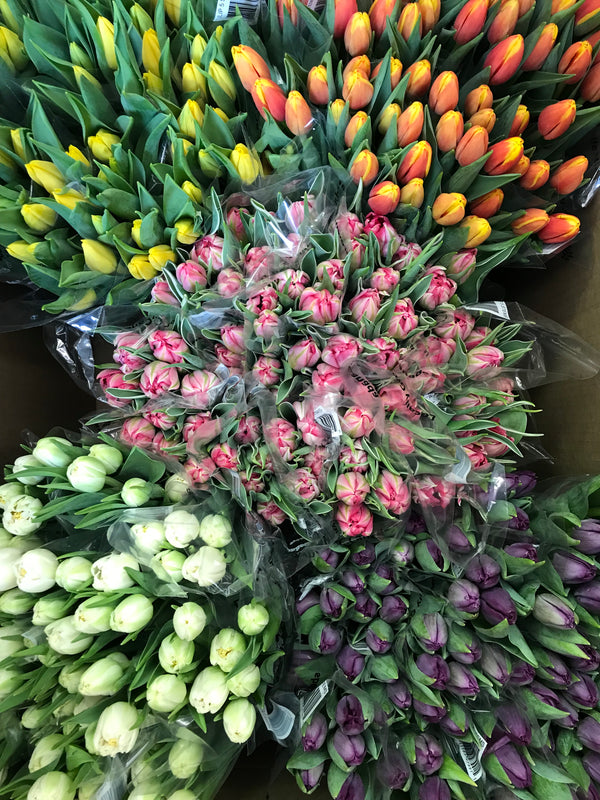 20 stem tulip bunch - Winnipeg Flower Delivery by Broadway Florists