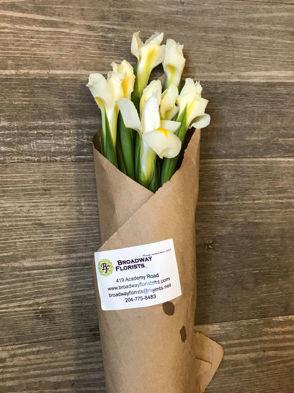 White iris 10 stem bouquet - Winnipeg Flower Delivery by Broadway Florists