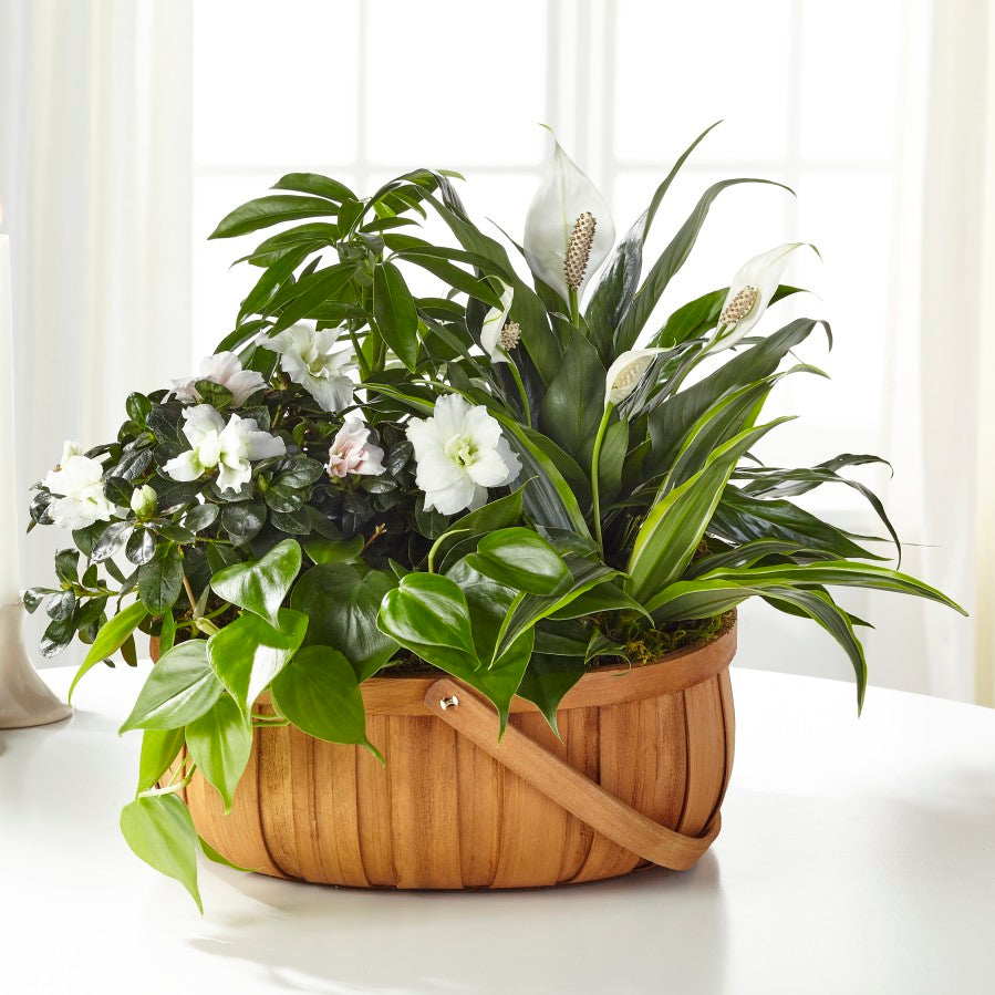 Serene Dishgarden - Winnipeg Flower Delivery by Broadway Florists