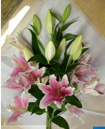 Pink Stargazer Lily  5 stem bouquet - Winnipeg Flower Delivery by Broadway Florists