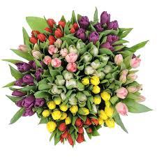 Tulip 5 stem bouquet - Winnipeg Flower Delivery by Broadway Florists