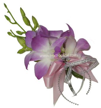 Dendrobium orchid corsage - Winnipeg Flower Delivery by Broadway Florists