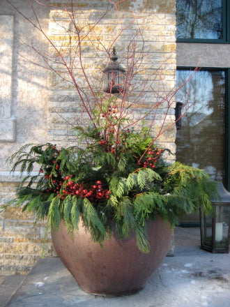 Winter greens pot - Winnipeg Flower Delivery by Broadway Florists