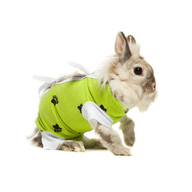 rabbit wearing lime green recovery wear