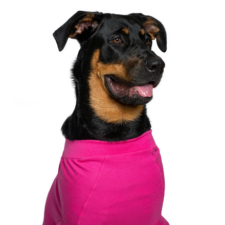 recovery suit dog pink Rottweiler