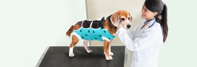 veterinarian with dog green surgery recovery suit