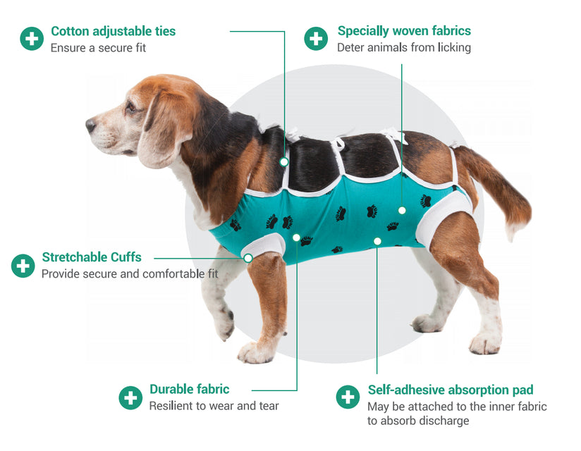 ecollar alternative diagram for dogs