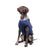 ecollar alternative recovery gown pets dog blue