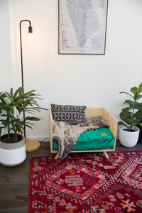 Green Velvet Pet Cushion Made in Australia - Shop Design My Digs Dog Cushions Online
