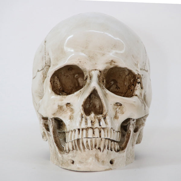 Statues Sculptures Resin Halloween Home Decor Decorative Craft Skull Size 1:1 Model Life Replica Medical High Quality