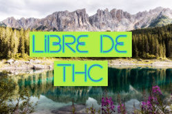 CBD; la marihuana light que arrasa