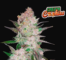Semillas FastBuds Cream cookies