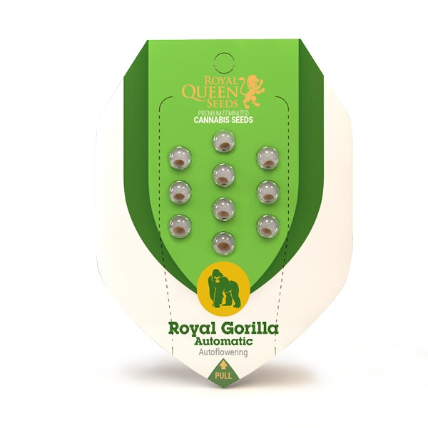 Semillas RQ Royal Gorilla Auto