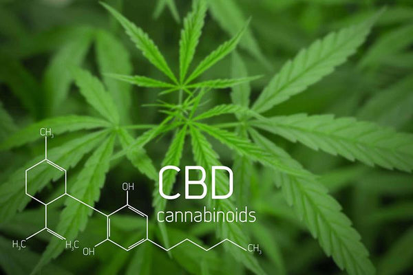 All about Cannabidiol (CBD) Products