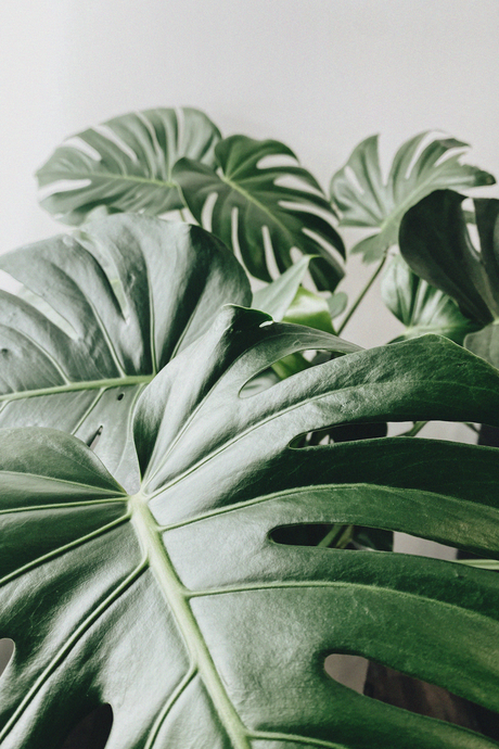 4 Items That Best Spark Creativity // featuring plants + ponytails