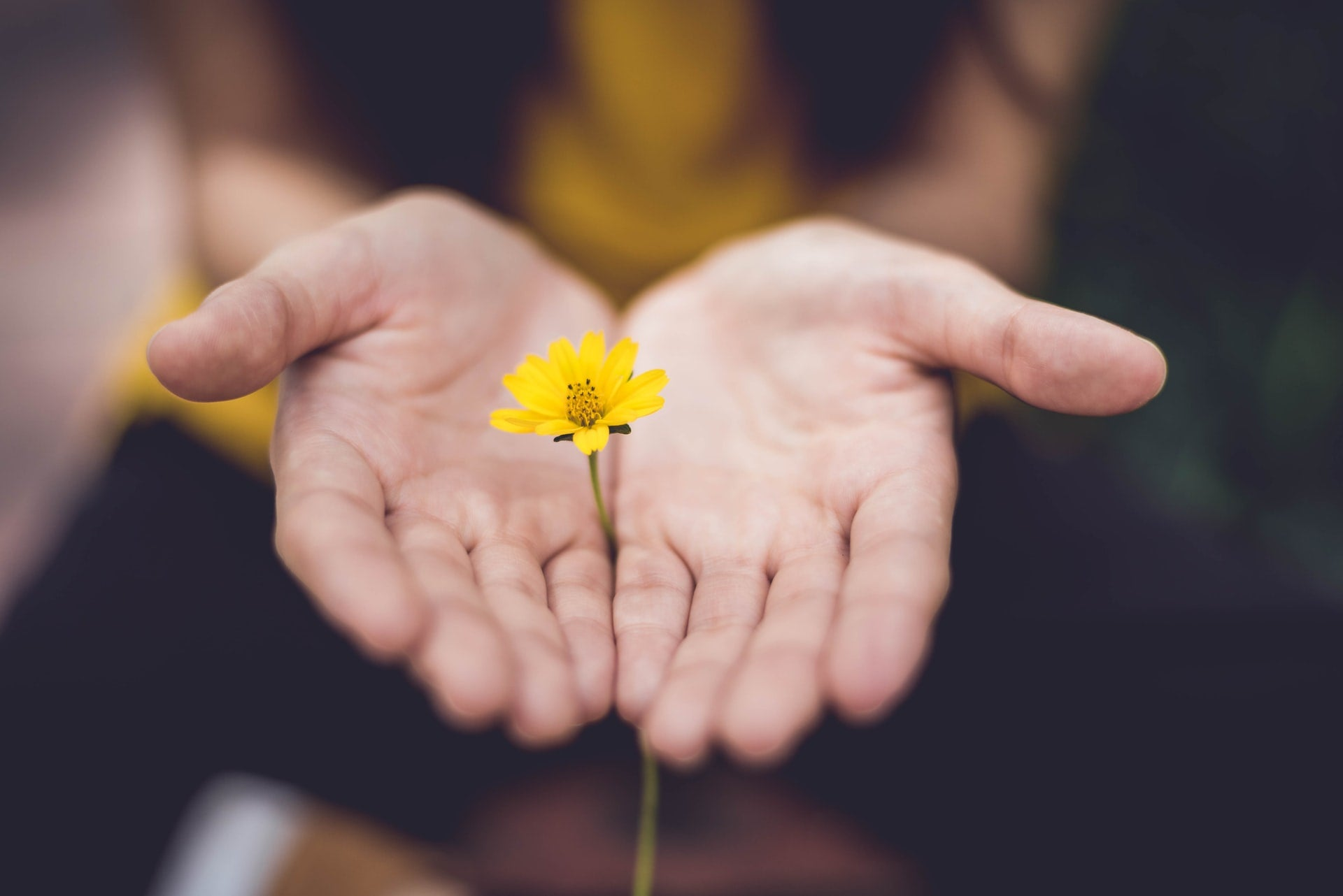 Hand holding out a yellow flower as a gift for someone with anxiety.