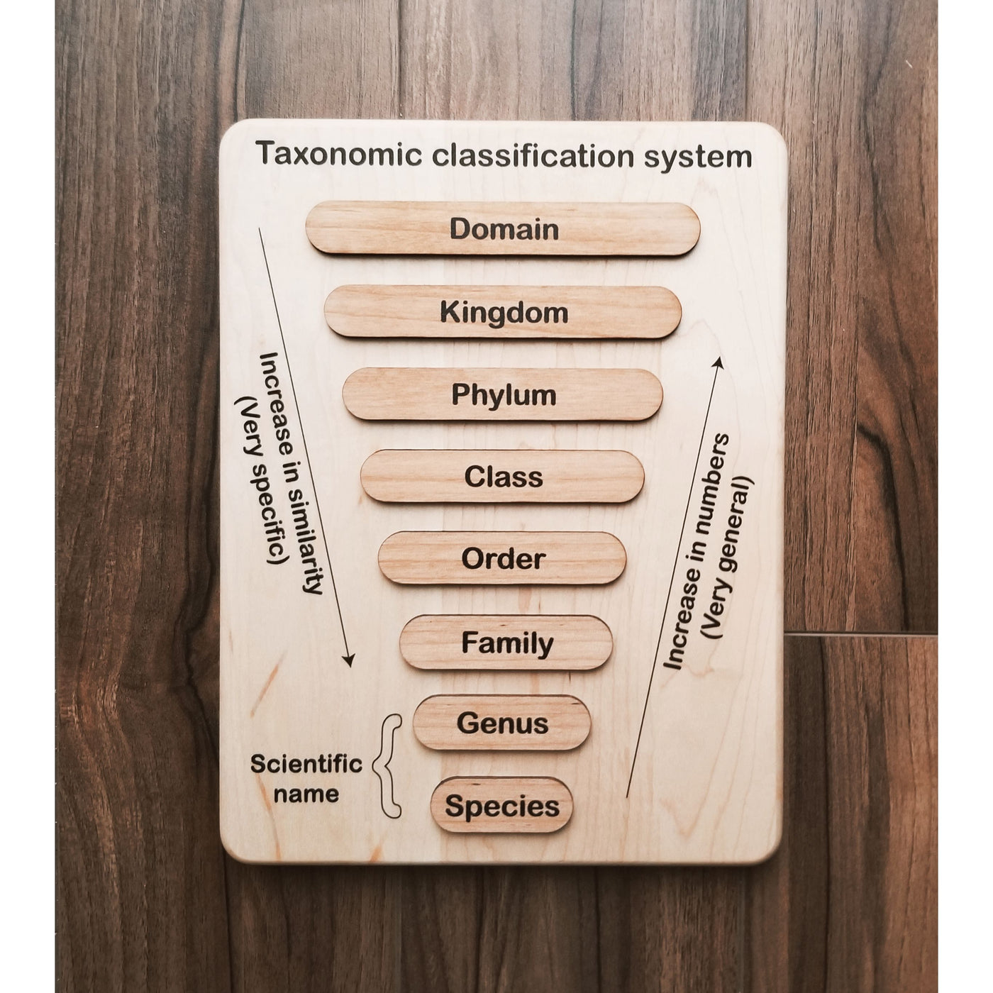 Taxonomy puzzle - Classification chart - Animal kingdom classification puzzle
