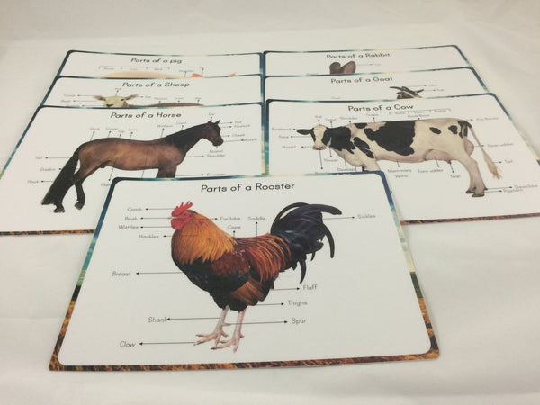 Farm animals anatomy prints, parts of animal cards, farm animal poster