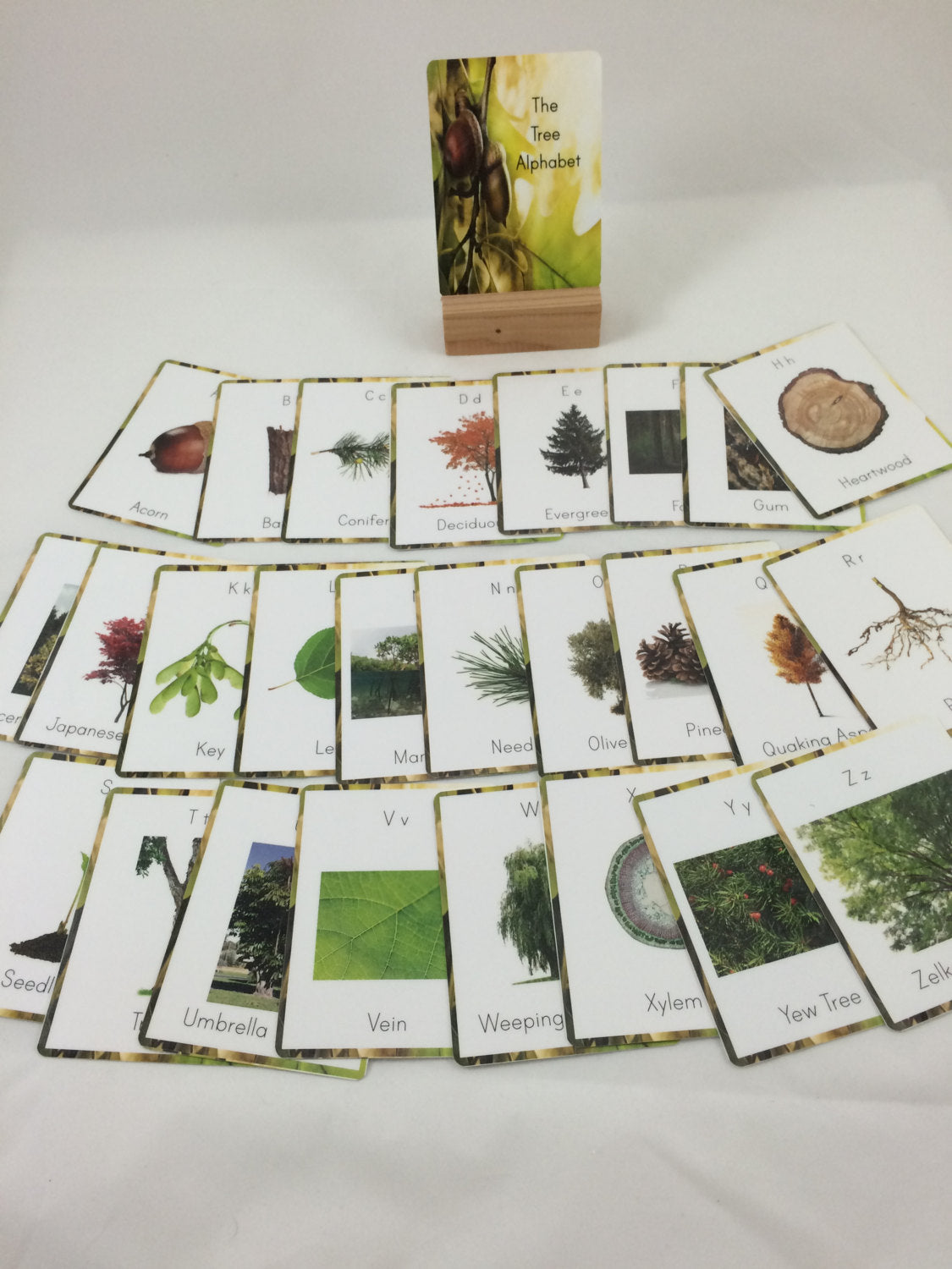 Tree alphabet cards, tree vocabulary cards, nature wall decor