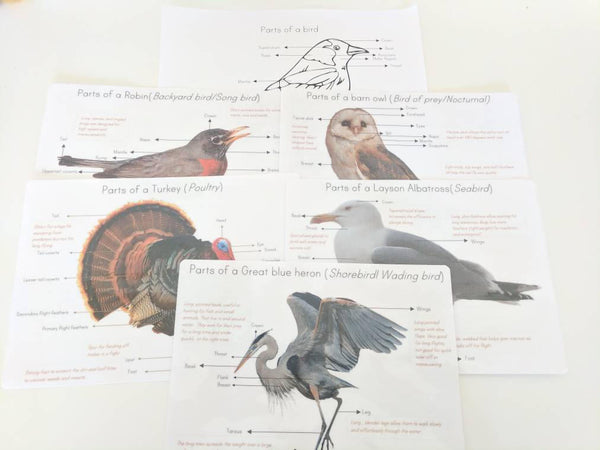 Bird anatomy posters - anatomy wall decor - parts of a bird - classroom decor - Montessori - homeschooling
