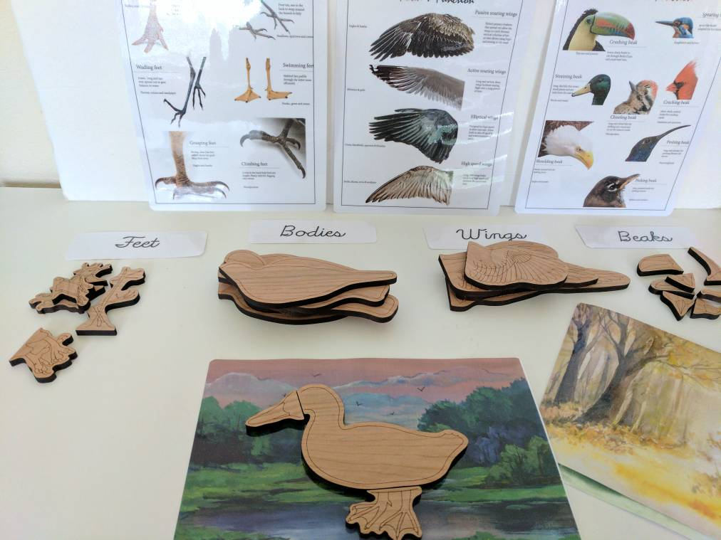 Bird lover gift - Build a bird wooden puzzle - montessori toys - Waldorf - Reggio inspired - homeschooling - Christmas gift - bird puzzle