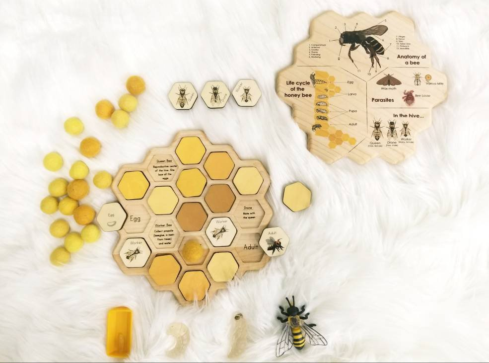 Honey bee puzzle - honeycomb - bee life cycle - types of bees - bee unit study - Montessori - Waldorf