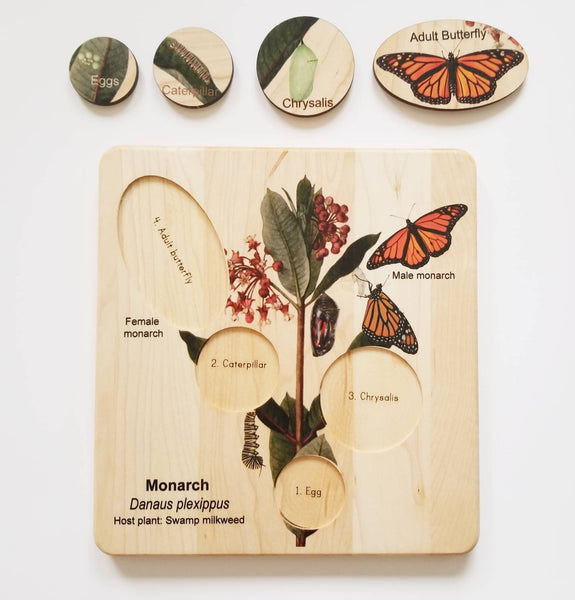Life cycle of a monarch butterfly, butterfly life cycle, Montessori materials, monarch life cycle, waldorf inspired,