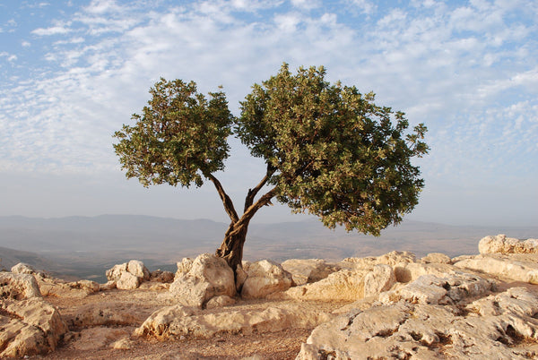 The Aiken Family X Family Teams Israel Tour - LAND ONLY (DEPOSIT) Jan 4-11 2021
