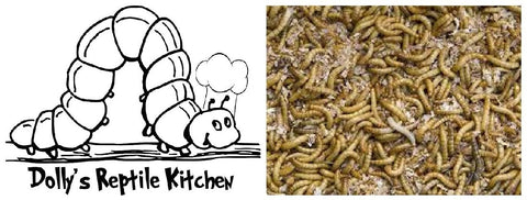 DOLLY'S REPTILE KITCHEN - MEAL WORMS 100