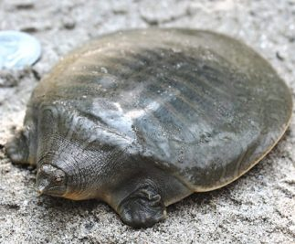 TURTLES ARE DYING