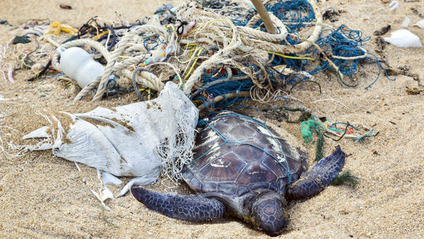 PLASTICS KILL TURTLES