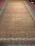 Antique Saraband Gallery Rug