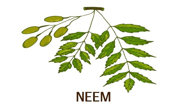 Power of Neem for Scalp Health