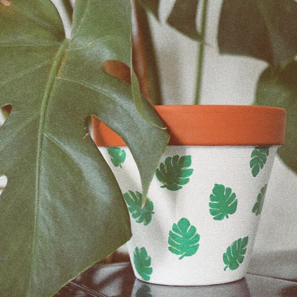 pot feuille monstera