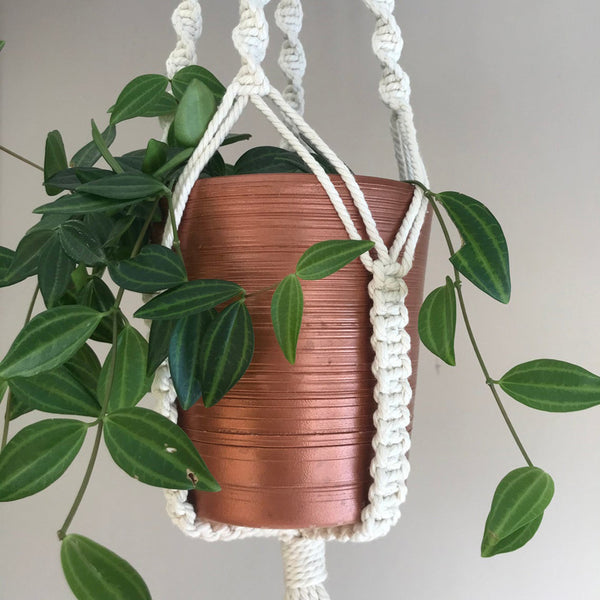 suspension macramé plantes pilea